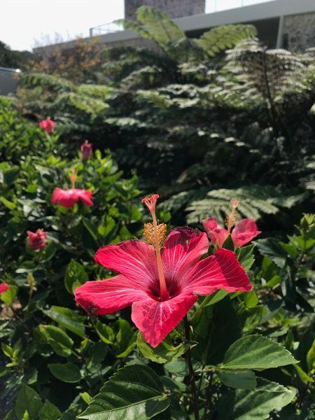 19oki-flower
