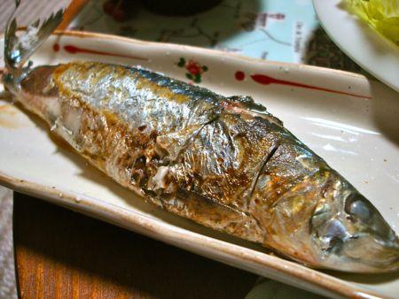 1408gigaru2_iwashi
